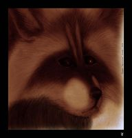 Coon face by Foxia
