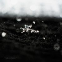 dying snowflake by guality