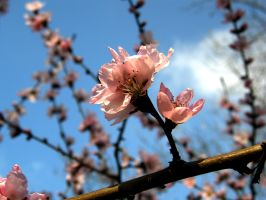 Spring is here by d7baly
