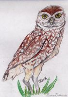 Owl by BamaBelle2012