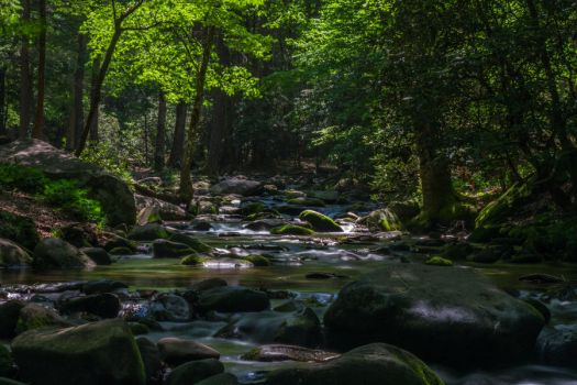 Morning On A Forest Stream by JonUriah