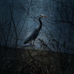 Heron edited by mstargazer