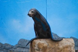 Sea Lion by aclay08