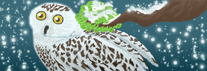 Snowy Owl for lack-of-color by kajigoddess