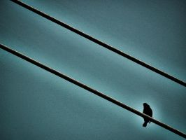 Bird on a Wire 3 by magicalavatarian