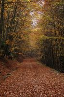 Autumn Path by Khalidia