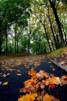 Follow The Yellow Leaf Road by Jazzhead