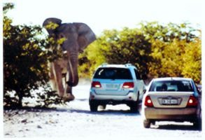 Elephant Charging by debarch