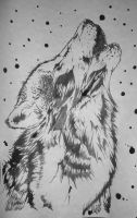 The Gray Wolf by AlyWiish