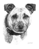 Orla by Austin-Animal-Art