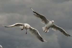 Seagulls of Sopot by lupusmagus