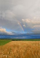 Colors on a gray sky by BogdanEpure
