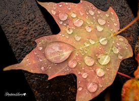 A little Fall rain by gigi50