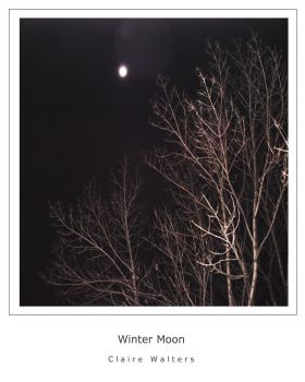 Winter Moon by ctw