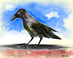 Hooded Crow by altergromit