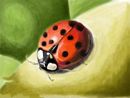 Lady Bug by designgirl2