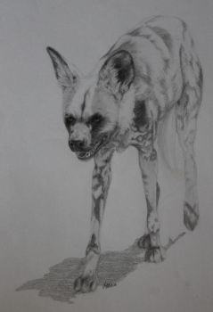 African wild dog by x-Uchiwa-x