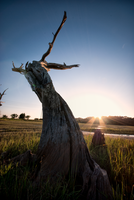 Twisted Marsh Tree by Bawwomick