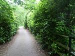 Alton Towers - The Gardens by Crayons-of-death