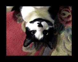 You Look Funny Upsidedown by Loulou13