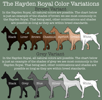The Hayden Royal Color Variation by BV-Academy
