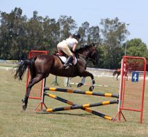STOCK Showjumping 367 by aussiegal7