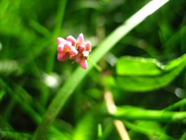 Little Pink Weed by Holly6669666
