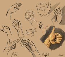 Hands study #1 by silverkeeper01