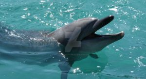 Laughing Dolphin by NaturalBeauty-Photos