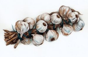 Garlic watercolor by Ch4r