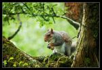 Mr squirrel 4 by Alexandra35
