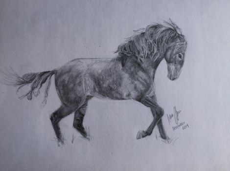 Andalusian Graphite Drawing by imaginepride