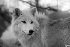 Wolf by Mob1