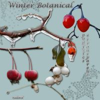 Winter botanical1 by libidules