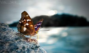 Butterfly by Vita-Ilitlay