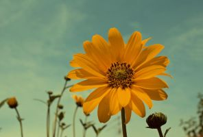 Exposed to sunlight by LiveInPix