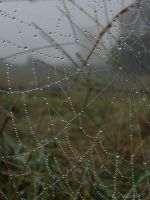 dew covered web by leashgrey