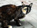 Tortoiseshell treasure. by Catist