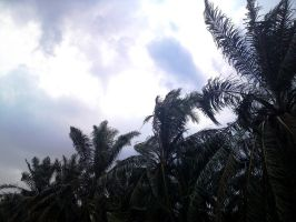 Oil Palm by ayien-chan