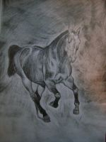 Canter by Fonika