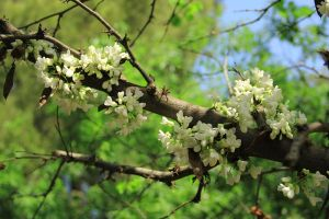 Blooming branches by yasminstock