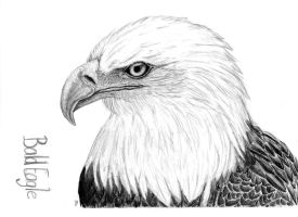 Bald Eagle drawing by Montieze