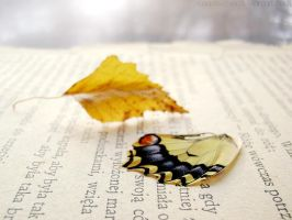 Fallen leaves, broken wings by rosaarvensis