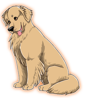 Golden retriever for FP by novablue