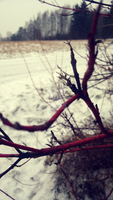 red branches 2. by JhoLc