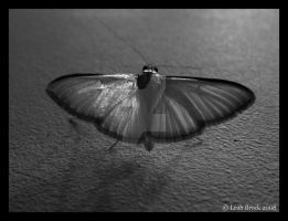 Moth Taking Flight by zieora