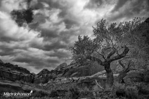 Light On the Cottonwood Tree BW by mjohanson