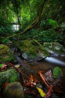 The River Forest by A-Rashed