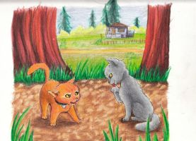 Rusty and Graypaw. first meet by Razzen
