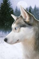 snow dog by uktilly